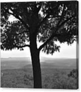 Meditation Tree  Canvas Print