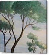 Mediterranean Pines Canvas Print