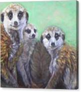 Meerkat Family Canvas Print