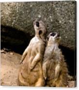 Meerkats Keeping An Eye Out Part 2 Canvas Print