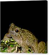 Mehu�n Green Frog Canvas Print