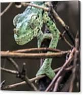 Mellers Chameleon Portrait 3 Canvas Print