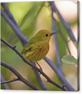 Mellow Yellow - American Warbler - Setophaga Petechia Canvas Print