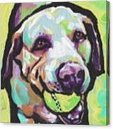 Mellow Yellow Lab Canvas Print