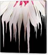 Melting Petals Canvas Print