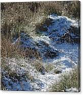 Melting Snow On Plants Canvas Print