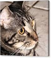 Melvin The Wondercat Canvas Print