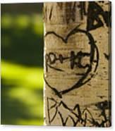 Memories In The Aspen Tree Canvas Print