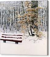 Memories Of Birchtrees Canvas Print