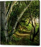 Mendoza Trail Canvas Print