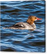 Merganser Canvas Print