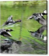 Merganser Reflections Canvas Print