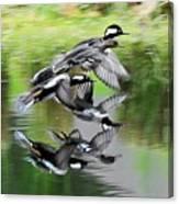 Mergansers In Flight Canvas Print