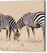 Merging Zebra Stripes Canvas Print