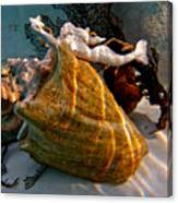 Mermaid On A Shell Canvas Print