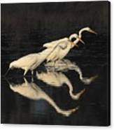 Merritt Island Egrets Canvas Print
