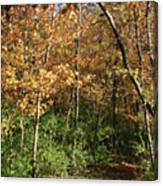 Merwin Autumn Trail Bend Canvas Print