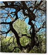Mesquite Window Canvas Print