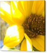 Metallic Green Bee In A Sunflower Canvas Print