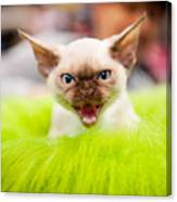 Mew Kitty Funny Mad Face Canvas Print