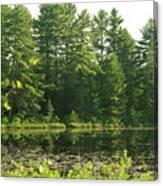 Mew Lake Algonquin Park Canvas Print