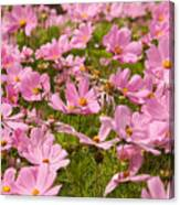 Mexican Aster Flowers 1 Canvas Print