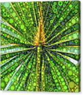 Mexican Fan Palm Leaf Canvas Print