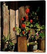 Mexican Geraniums Canvas Print