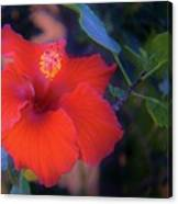 Mexican Hibiscus Canvas Print