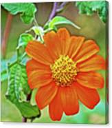 Mexican Sunflower Along White Pine Trail In Kent County, Michigan  Canvas Print