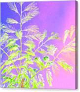Miami Fern Canvas Print