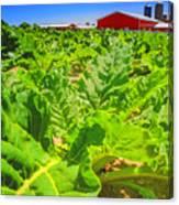 Michigan Surgar Beet Farming Canvas Print