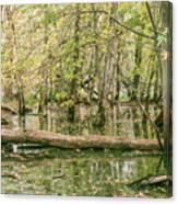 Michigan Swamp Canvas Print