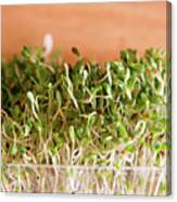 Micro Green Canvas Print