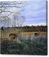 Take Out - Deer Canvas Print