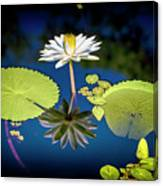 Mid Day Water Lily Reflection Canvas Print