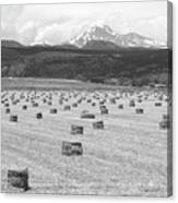 Mid June Colorado Hay  And The Twin Peaks Longs And Meeker Bw Canvas Print
