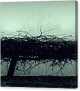 Middlethorpe Tree In Fog Gray And Green Panorama Canvas Print
