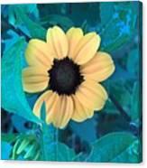 Midnight Bloom Canvas Print