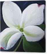 Midnight Blossom Canvas Print