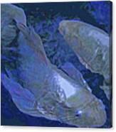 Midnight Blue Koi Canvas Print