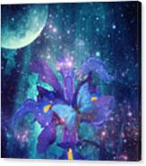Midnight Butterfly Canvas Print