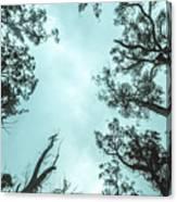 Midnight Canopy Canvas Print