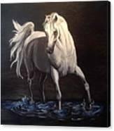 Midnight Prance Canvas Print