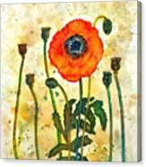 Midsummer Poppy Canvas Print