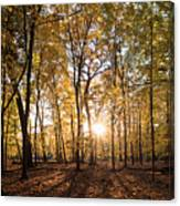 Midwest Forest Canvas Print