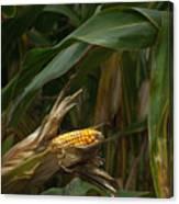 Midwest Harvest Canvas Print