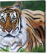 Mighty Bengal Canvas Print