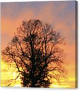 Mighty Oak At Sunset Canvas Print