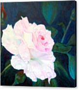 Midnight Rose Canvas Print